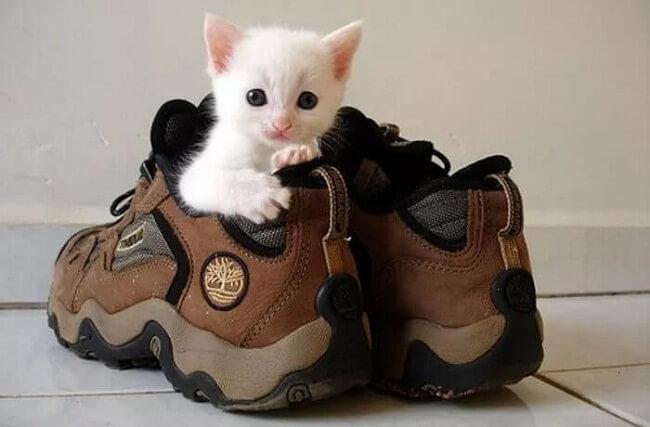 устранение запаха от кошачьей мочи
