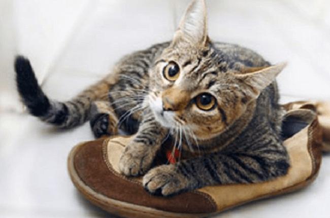 запах мочи в обуви