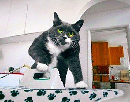 кот гладит утюгом