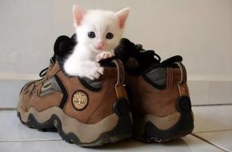Избавляемся от пятен и запаха кошачьей мочи из обуви: только проверенные средства